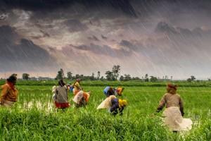 File photo of a farm in Madhya Pradesh. Credit: Rajarshi Mitra (CC 2.0)