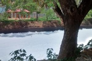 Bellandur canal, with front. Credit: Anjali Vaidya
