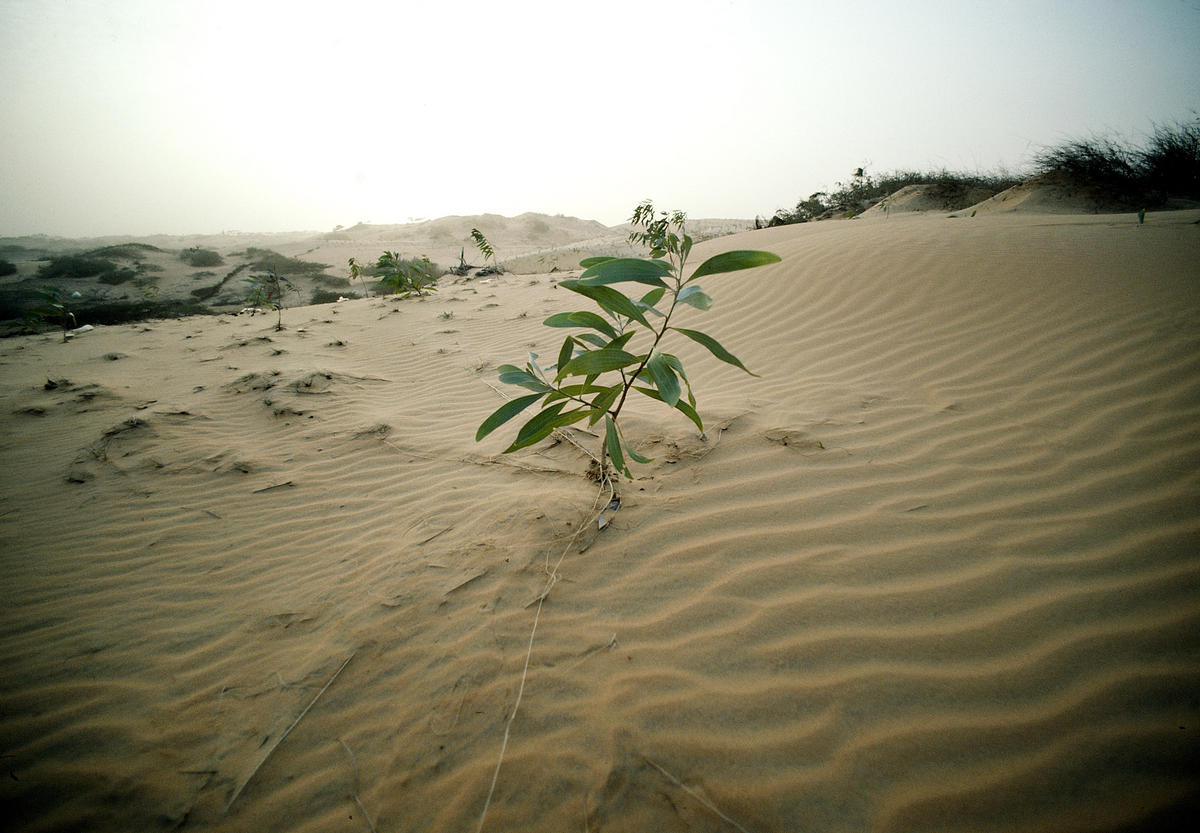 As India Runs out of Water, Its Desertified Land Comes Into View