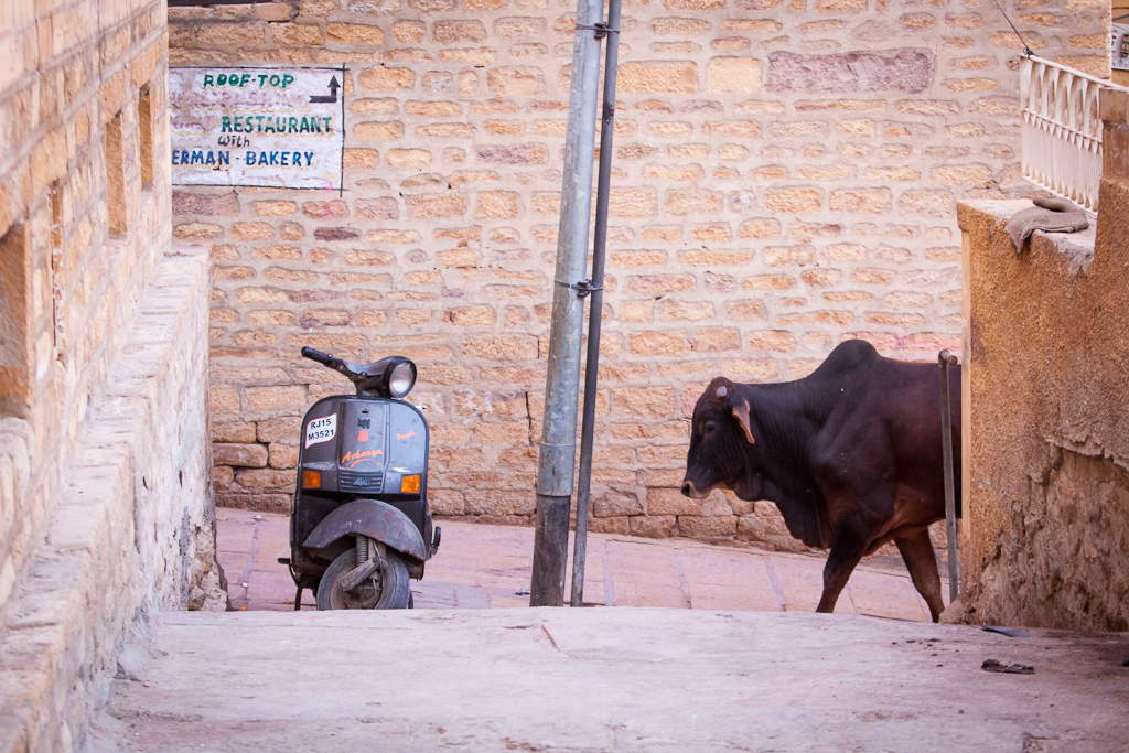 Street scene, Jaisalmer. Photo: Riccardo Romano (https://creativecommons.org/licenses/by-nc-nd/2.0/)