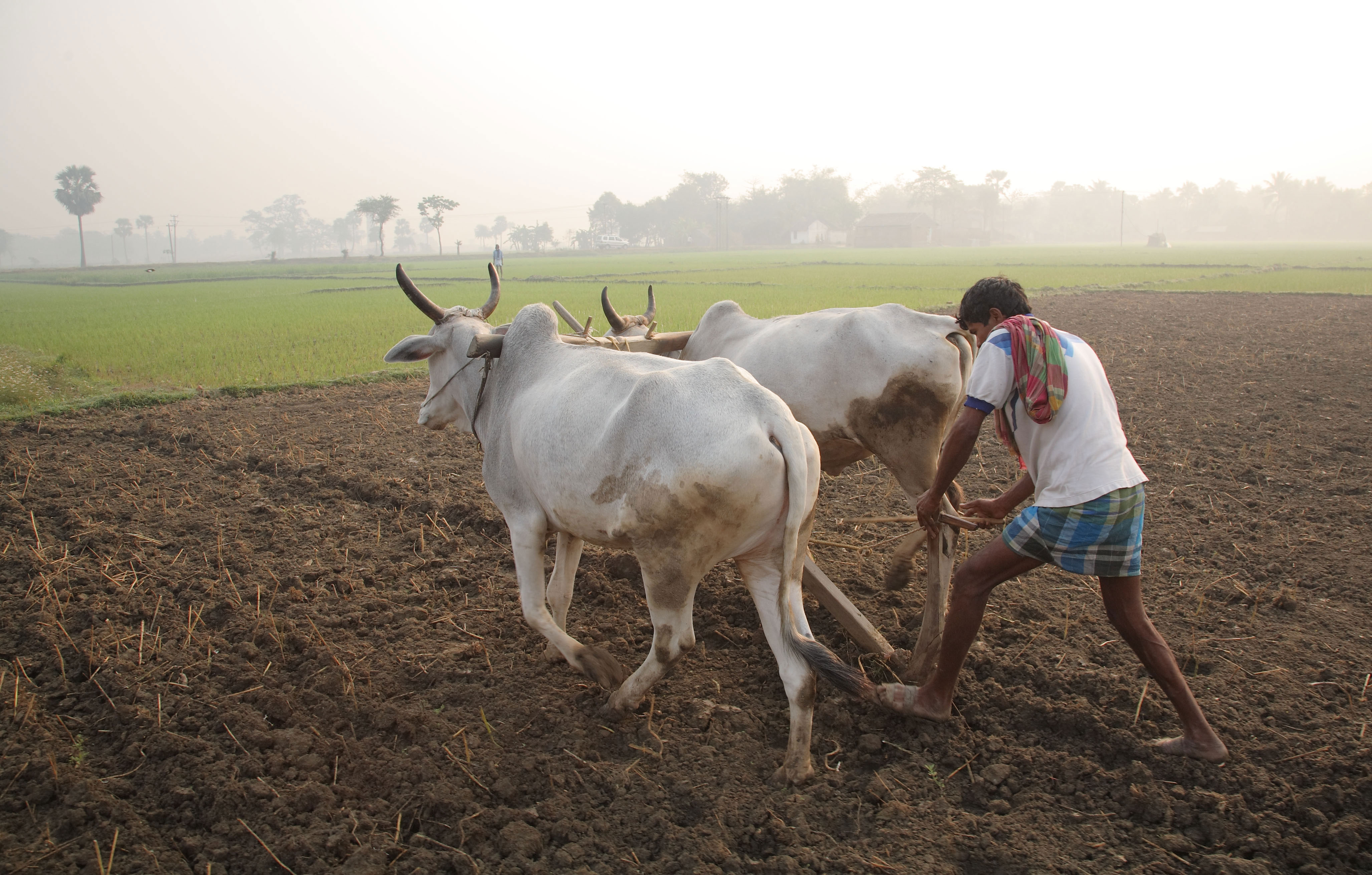 Agriculture in India. Credit: Wikimedia Commons