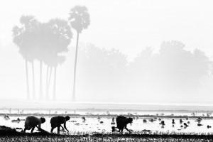 Farmers in Tamil Nadu. Credit: vinothchandar/Flickr, CC BY 2.0