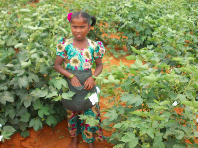 The Plight of Cottonseed Workers Reveals Why Child Labour Persists