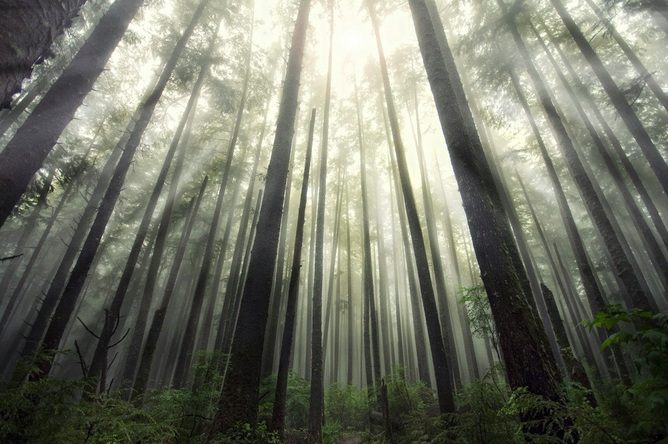 Three Trillion Trees Live on Earth, But There Would be Twice as Many Without Humans