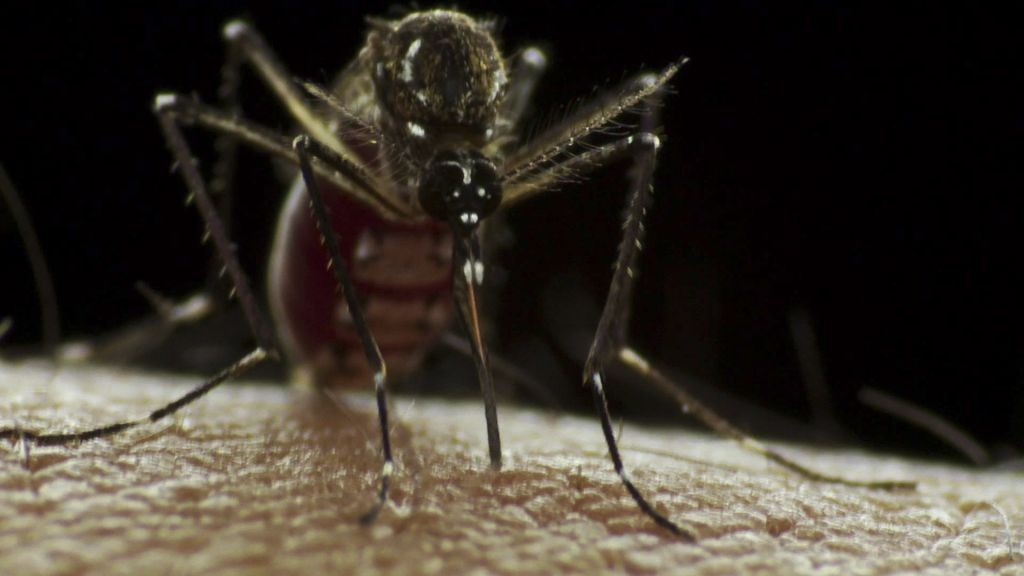 From National Capital to Mosquito Metropolis, How Delhi Built Itself an Epidemic