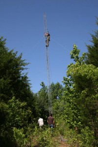 The team put up three radio towers, each with six antennas on it, to track the cowbird juveniles and the female cowbirds day and night. Credit: Matthew McKim Louder