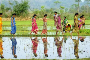 Women working in their rice paddy fields in Odisha. Credit: Justin Kernoghan/Flickr