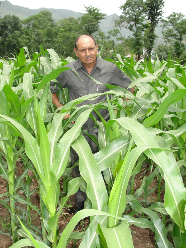 Farmer's Notebook: How an Entire Village in Jammu and Kashmir Took to Maize