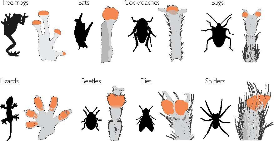 The diversity of adhesive pads in a range of creatures. Credit: David Labonte