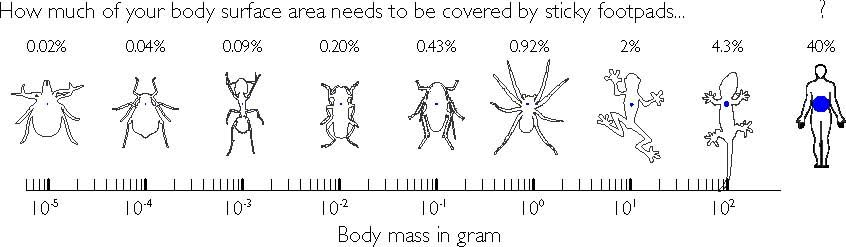How much of your body surface area needs to be covered by sticky footpads? Credit: David Labonte