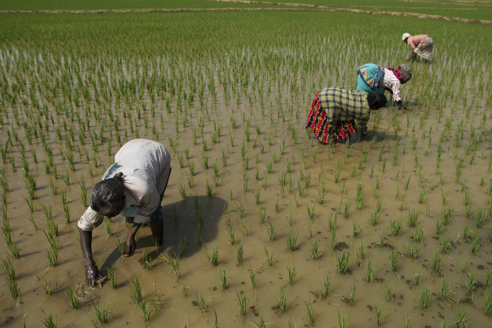 The Life of Labour: Wayanad's Farmers Wary of Promises; Silent Death of Workers