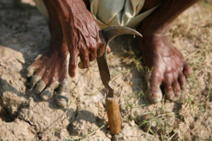 A farmer, his sickle and a barren piece of land. Credit: Reuters