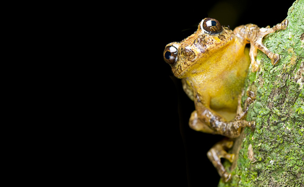 Frogs, Birds, Lizards: What's Behind the Spate of New Discoveries in India?