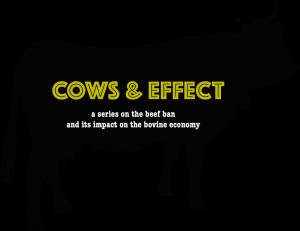 cow logo final
