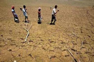Drought-hit farmers in Karnataka. Credit: PTI