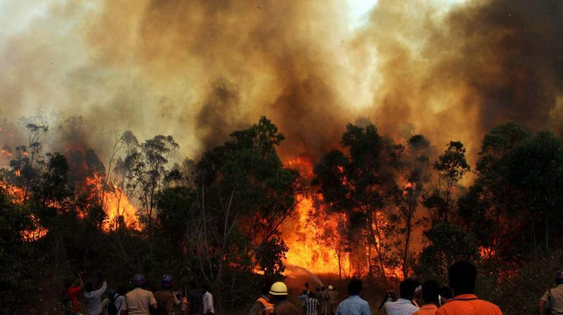 Raging Fires in the 'Holy' Forests of Chitrakoot