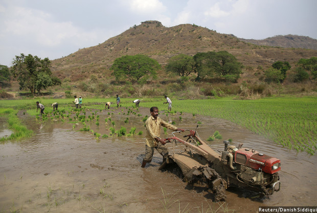 Land Reforms Fail; 5% of India's Farmers Control 32% Land