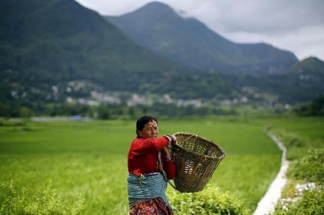 With Men Working Overseas, Women Revolutionise Farming in Rural Nepal