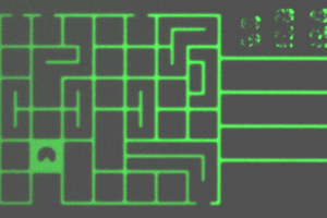 Image of the maze loaded with fluorescein. The rectangle on the right is the finish line.