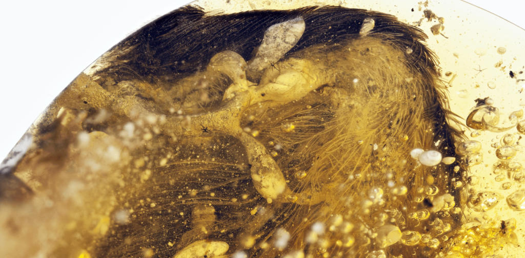 Tiny Wings Trapped in Amber 99 Million Years Ago Reveal New Secrets of Earliest Birds