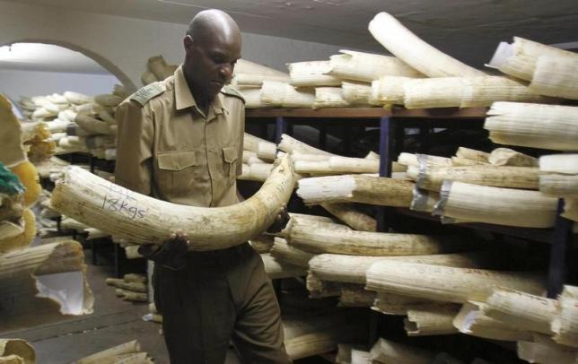 Zimbabwe Refuses to Destroy Ivory Stocks, Lobbies Neighbours on Trade