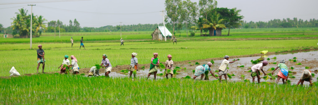 Paddy farmers in Tamil Nadu. Credit: Feng Zhong/Flickr CC BY-NC-ND 2.0