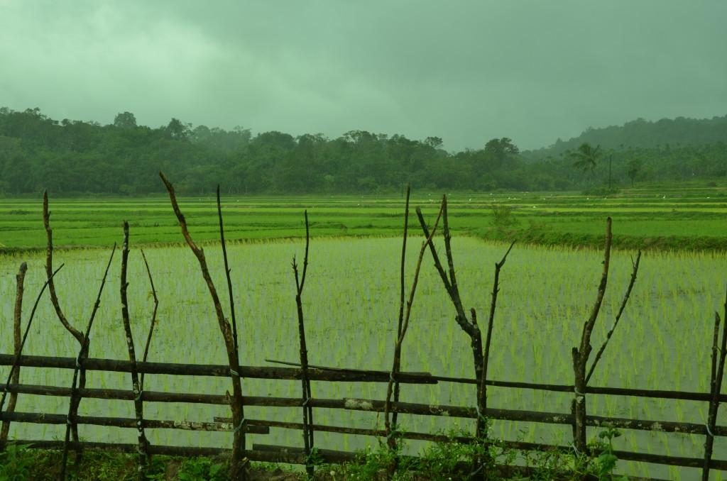Kalkuli Vittal Hegde´s farm in Sringeri, Karnataka. Credit: Sakshi.