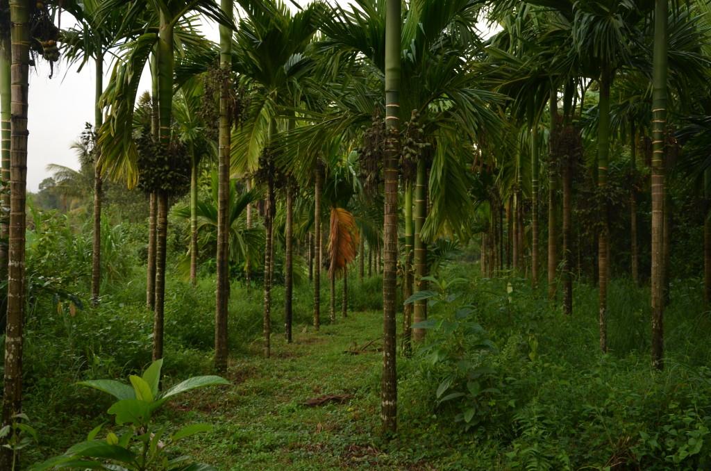 Sringeri, Karnataka. Credit: Sakshi.