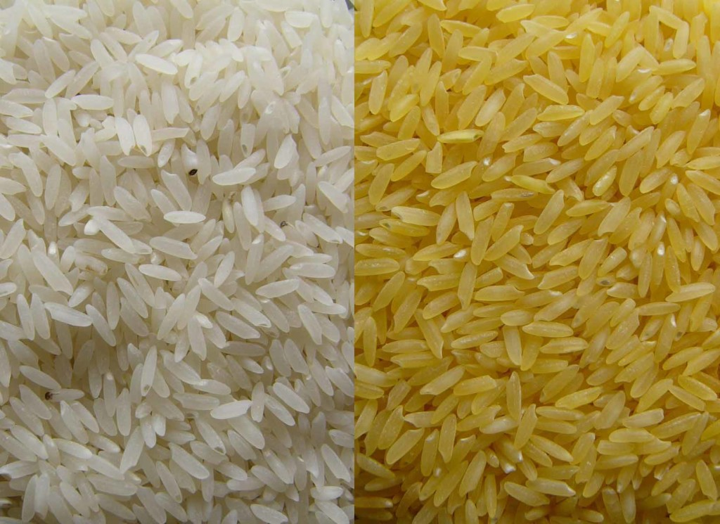 Nobel Laureates Slam Greenpeace's Opposition to GMOs, Golden Rice