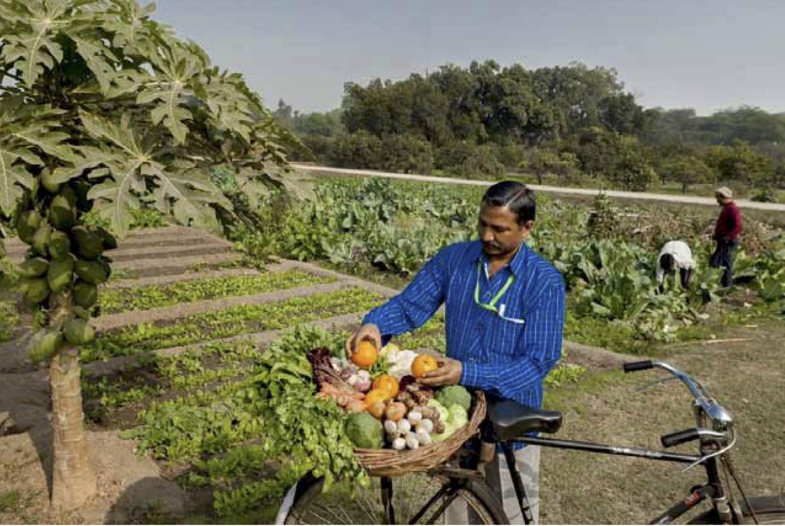 Fresh fruit and vegetables on theway to the President'skitchen. Credit: Narendra Bisht