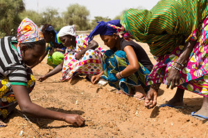 Credit: Great Green Wall/In-Depth News