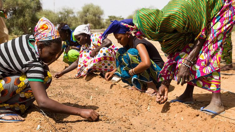 Africa's Great Green Wall is Building Hope For the Hungry, Uniting People Across Borders