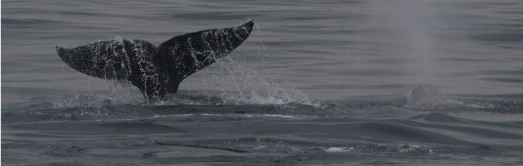 Big Oil and Activists Unite to Protect Endangered Whales
