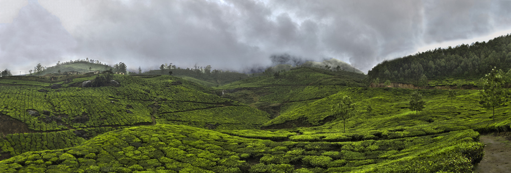 Deforestation Reducing Monsoon Rainfall in India: New Study