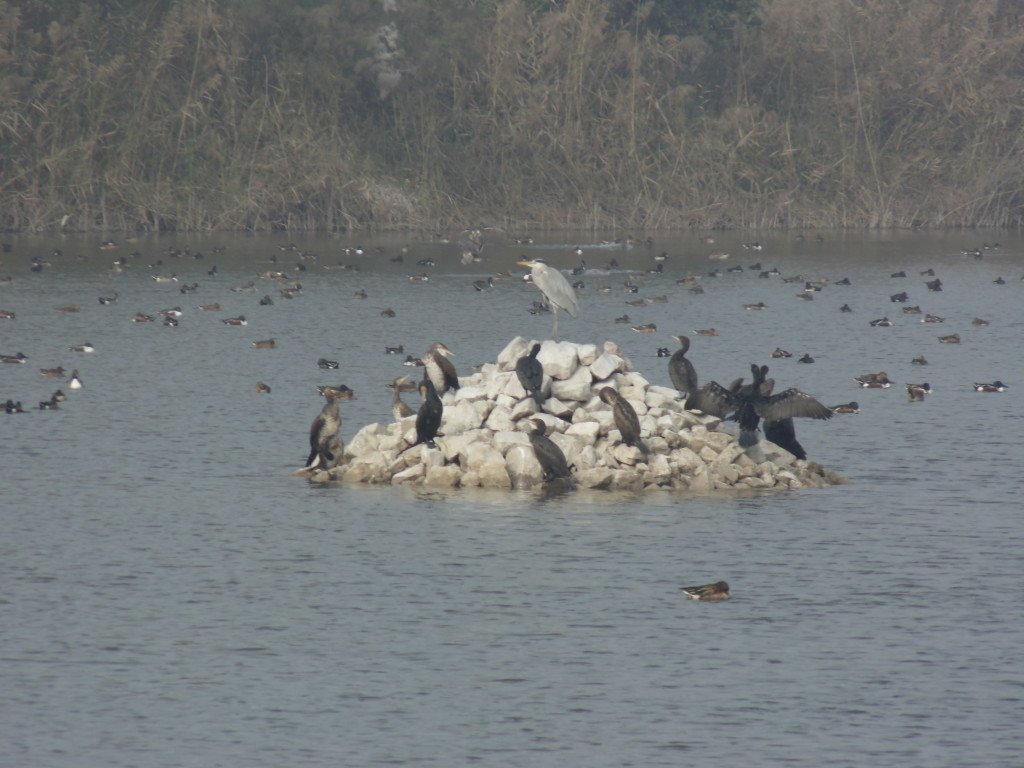 Who is Responsible for Wetlands in India? Many and No One