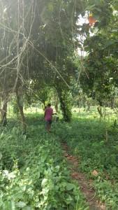 A cadre walking into the forest. Credit: sangeeta Barooah Pisharoty
