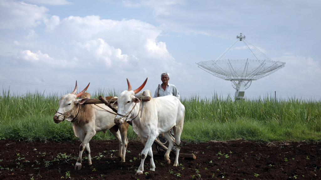 A farmer uses his oxen to till his land in front of a satellite dish set up in an adjacent field in Narayangaon September 28, 2012. REUTERS/Vivek Prakash (INDIA - Tags: TPX IMAGES OF THE DAY SOCIETY SCIENCE TECHNOLOGY BUSINESS TELECOMS ANIMALS AGRICULTURE) - RTR38J7K
