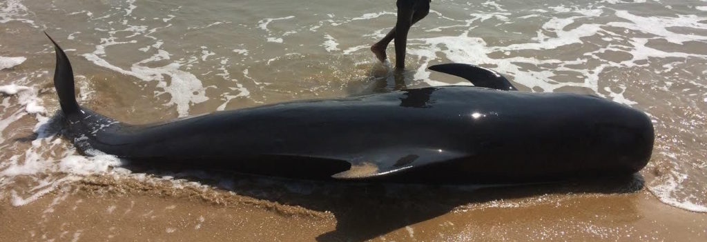 Why India Needs a National Framework for Responding to Stranded Marine Animals