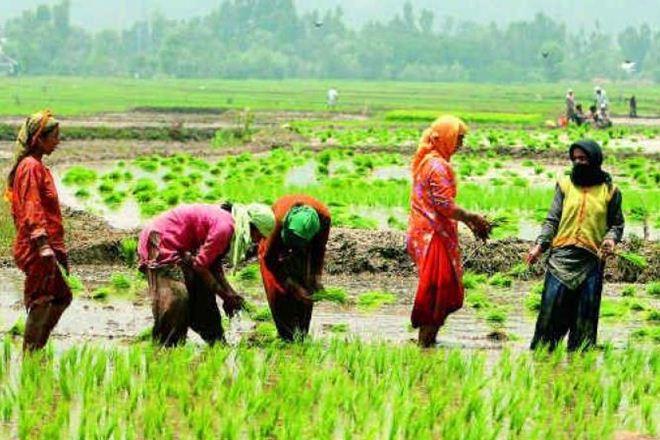 Representative image of farming in Assam. Credit: PTI
