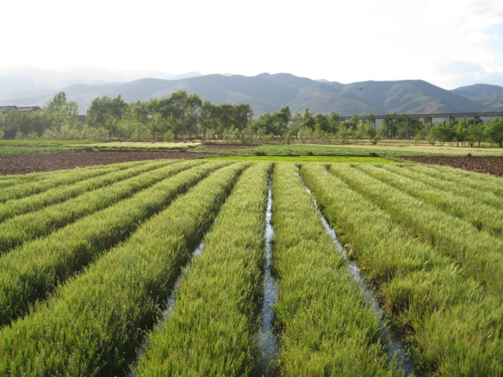 Irrigation in Yunan, China. Credit: Global Water Forum/Flickr CC BY 2.0