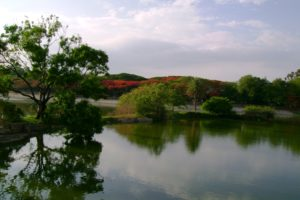 Lakeview of the Lalbagh in Bengaluru. Credit: Wikimedia Commons