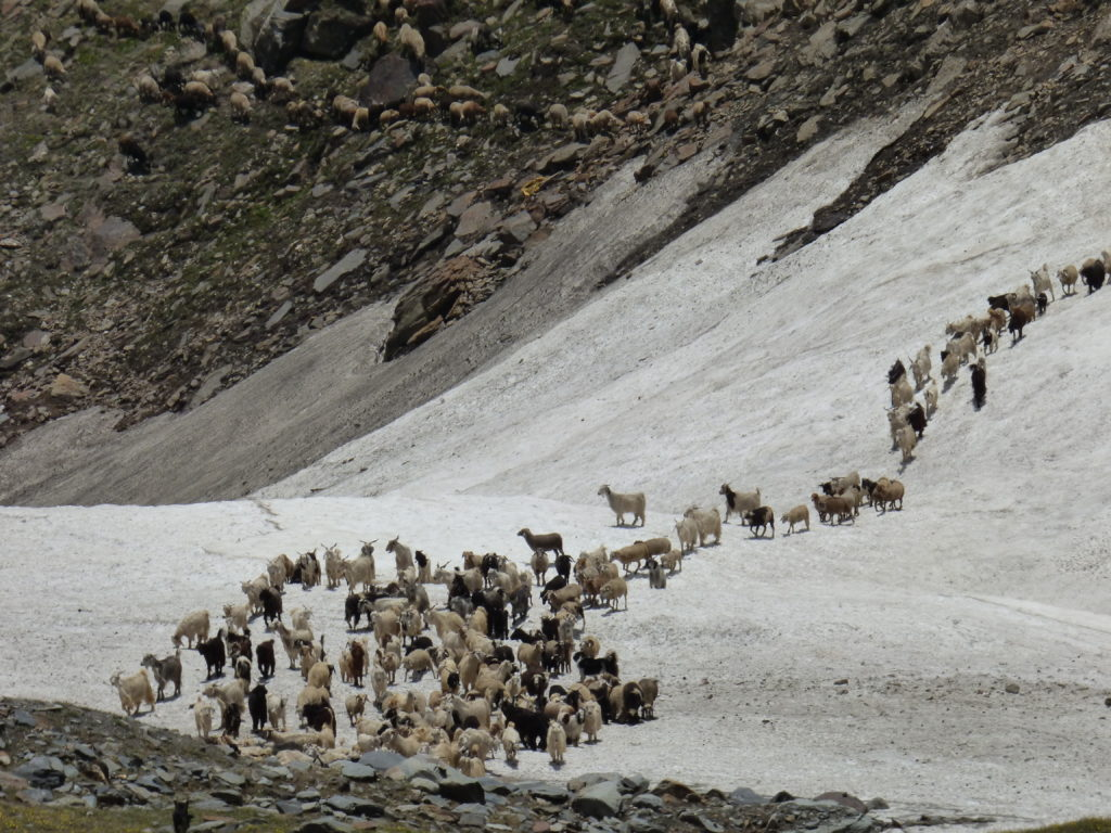 How Climate Change is Affecting an Old Pastoral Tradition in Spiti