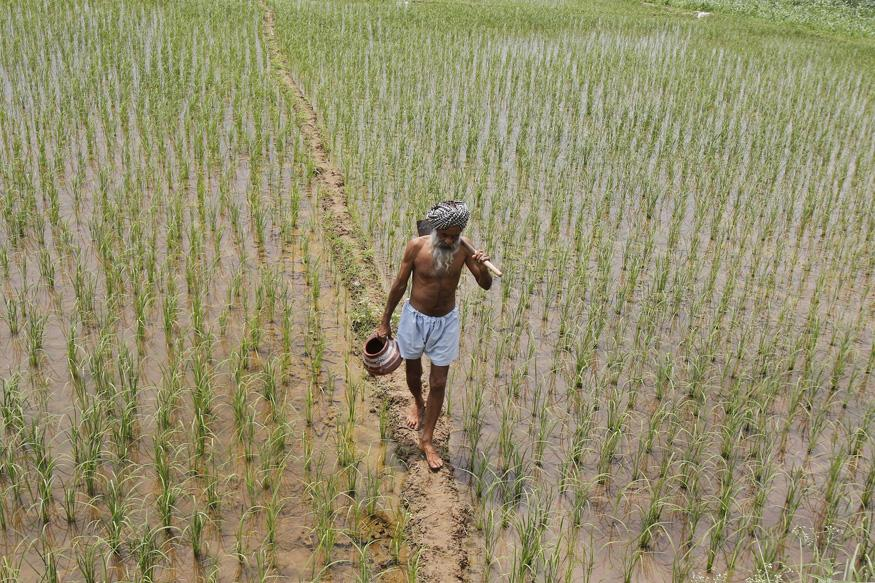 Decoding the Agony of the Indian Farmer