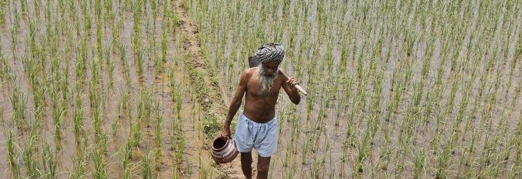 It Will Take More than a Loan Waiver for Punjab's Farmers to Stop Killing Themselves