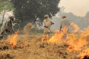 Farmers burning straw in a field. Credit: Wikimedia Commons