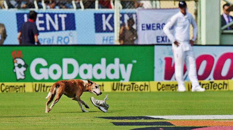 A stray dog disrupts play during the 1st day of 2nd Test Cricket match against England in Visakhapatnam on Thursday. Credit: PTI/Ashok Bhaumik