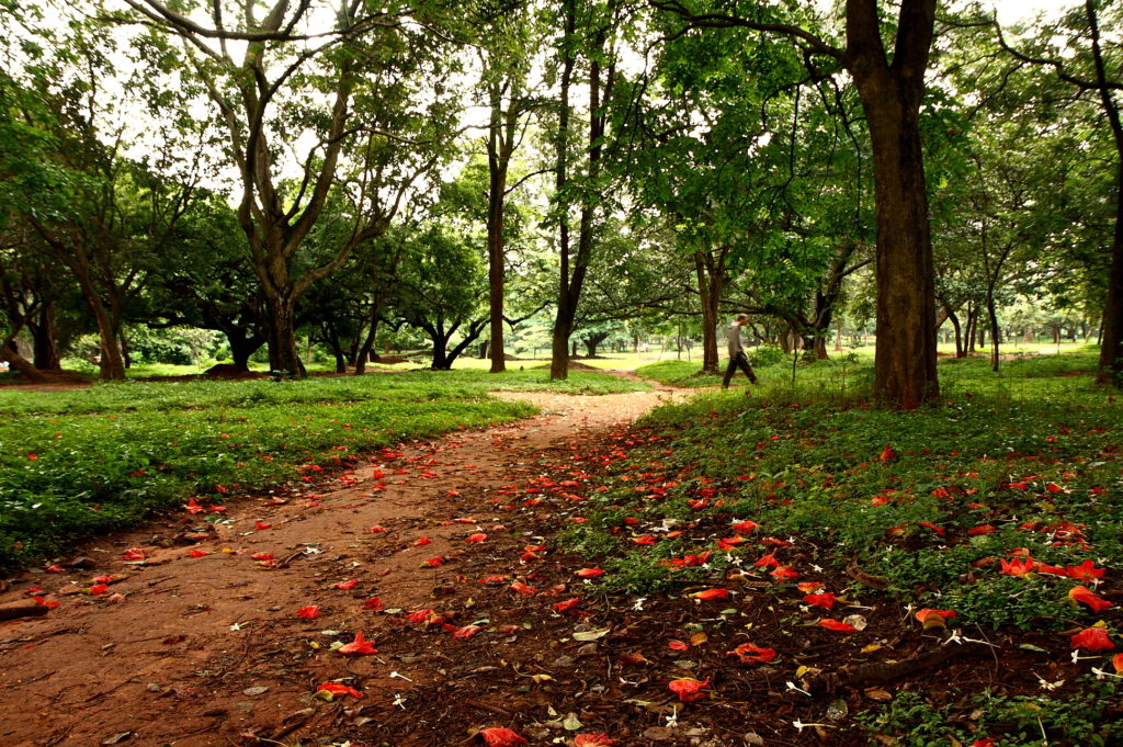 Cubbon Park in Bengaluru. Credit: Oliver/Flickr (CC BY-NC-ND 2.0)