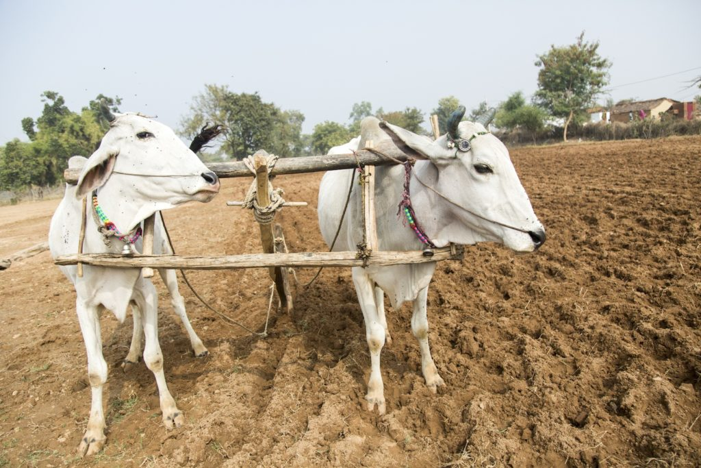 Watch: How Demonetisation has Wrecked the Agrarian Economy in Bundelkhand