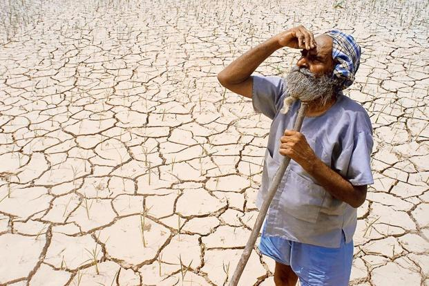 A picture of a drought-hit farm in the Cauvery delta in Tamil Nadu. Credit: Reuters