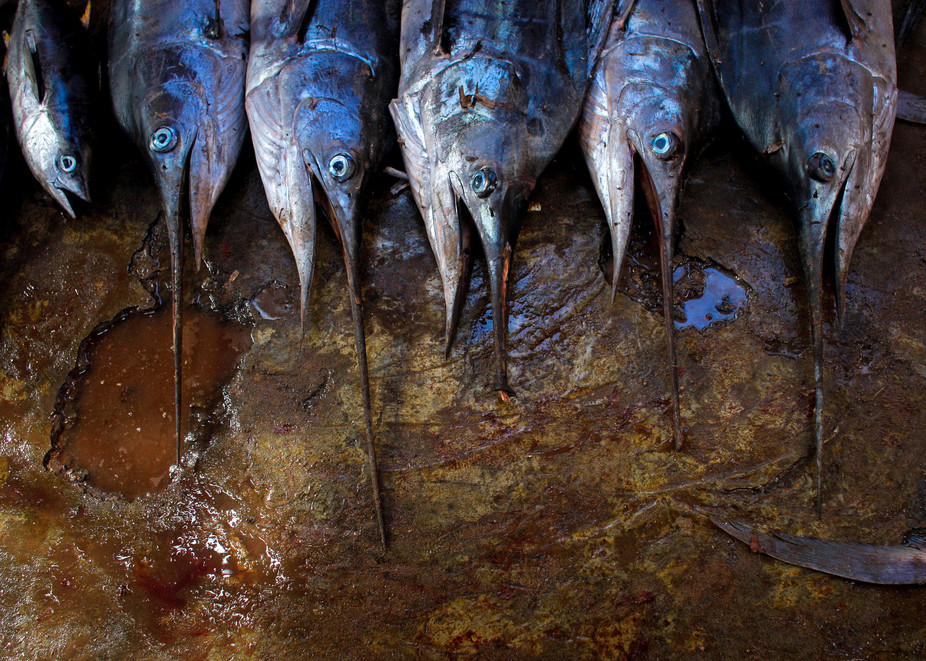 A new report finds that 35% of the fish stocks assessed in the Western Indian Ocean are fully exploited and 28% are over-exploited. Credit: Flickr/AMISOM